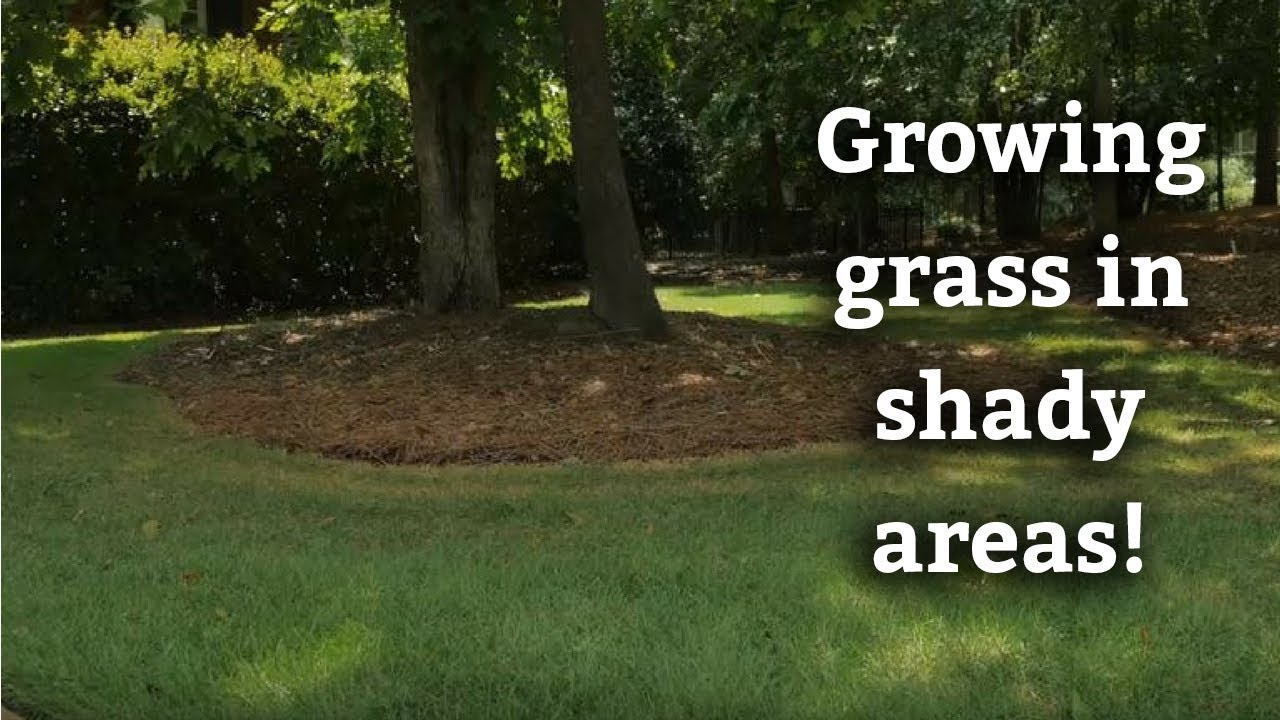 Growing Gr In Shady Areas