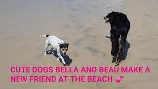 CUTE DOGS BELLA AND BEAU MAKE A NEW FRIEND AT THE BEACH! 🏖