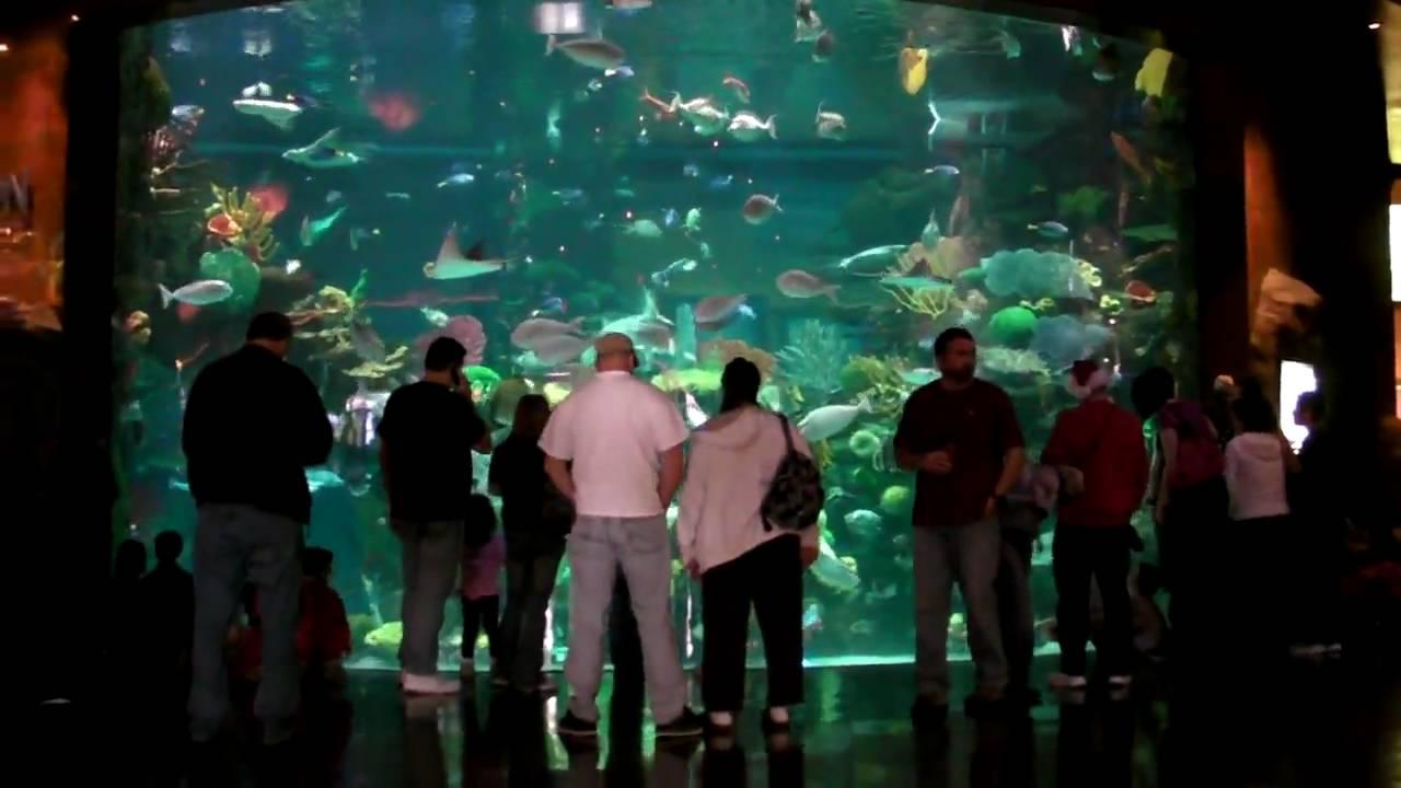 silverton casino aquarium