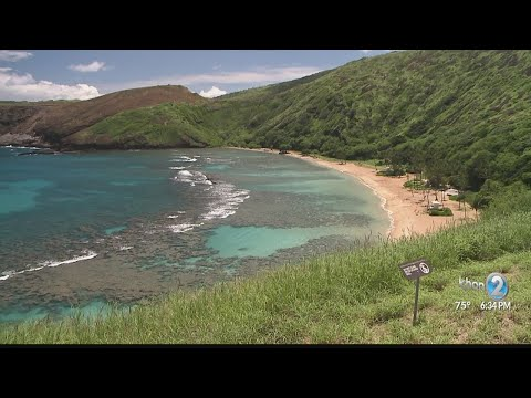 Hanauma Bay Beach Closed After 30 Stung By Box Jellyfish
