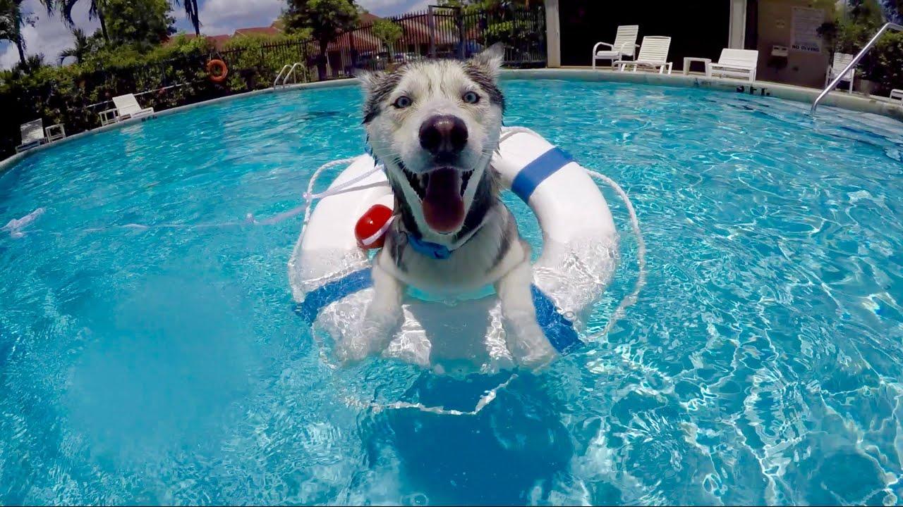 Gohan Loves The Pool Youtube