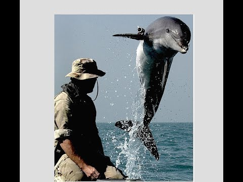 Government Reopens Temporarily & Cloned Dolphin Aliens Real Threat