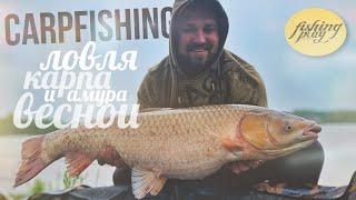 Ловля карпа и амура весной Столько рыбы мы еще не ловили Карпфишинг 2021
