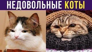 Приколы. Недовольные коты | Мемозг #243
