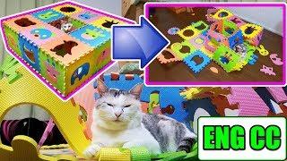 回の字猫トンネルの壮絶な結末をご覧下さい。A cat that breaks the tunnel thumbnail
