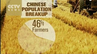 Quick look: Overview of China's agriculture