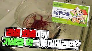 진짜 리얼회충에게 기생충약을 부어버리면 정말로 박멸될까? 바로 실험해보겠습니다