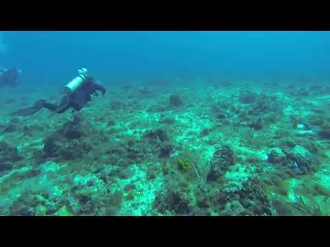 Diving the Cozumel Reefs