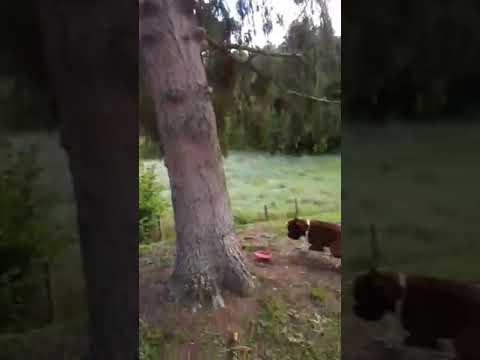 Il grimpe au arbres