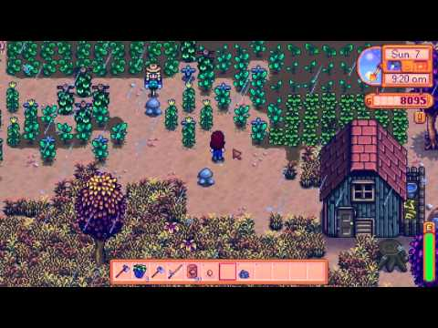 Stardew Valley 36, today we will acquire our eggplant empire!