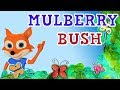 Bush Go Here Mulberry Round We Go