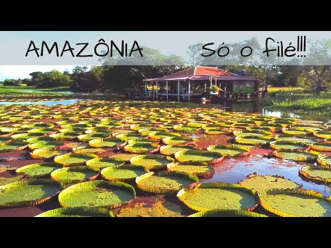 Conheça 3 lugares para turismo na AMAZÔNIA, no AMAZONAS e PARÁ