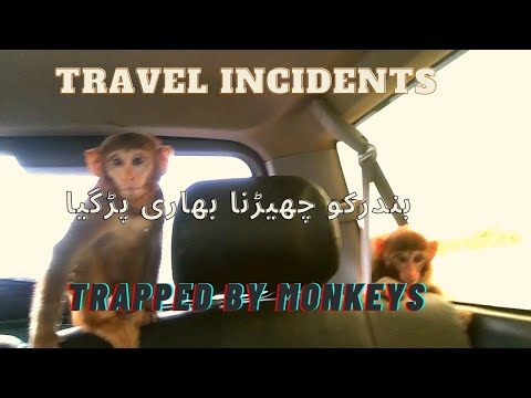 Travel Incidents | Attacked by monkeys
