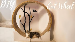 Building a DIY Cat Wheel!