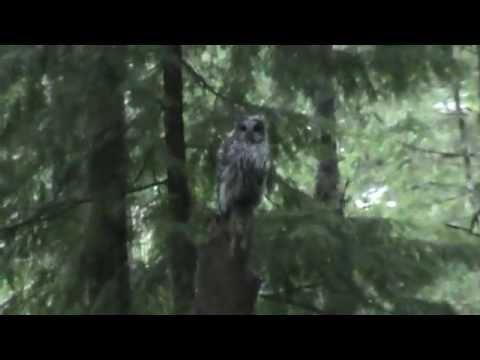 Mason County, WA | Videos | camp-spillman
