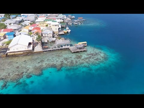 Video Of The Week | Dive Against Debris in Utila and Roatan