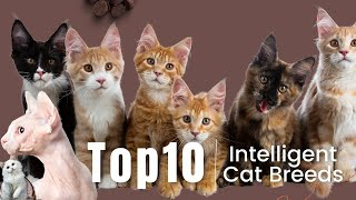 The 10 Most Intelligent Cat Breeds Ever