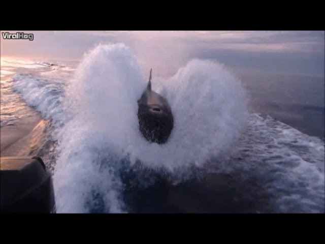 Watch the Astonishing Moment Orcas Chase a Fishermen's Boat