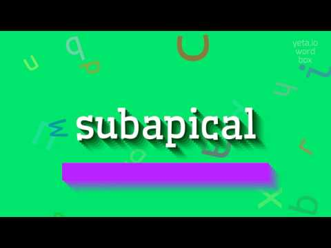 "How to say ""subapical""! (High Quality Voices)"