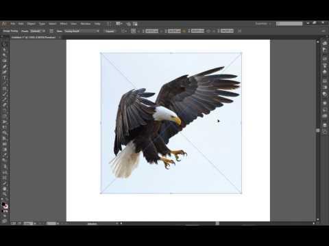 image-trace-in-adobe-illustrator-cc