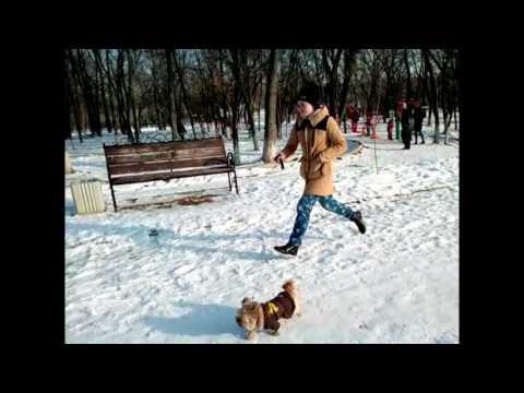 Новогодний пробег 1 января 2017 года Невинномысск СК Фортуна