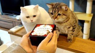 生まれて初めておせちを食べた猫!