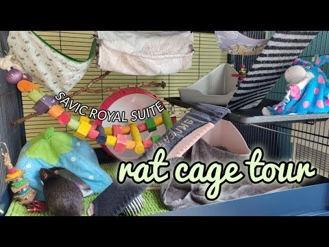 Rat Cage Tour // Savic Royal Suite 95 Double | DIY Pets & Life