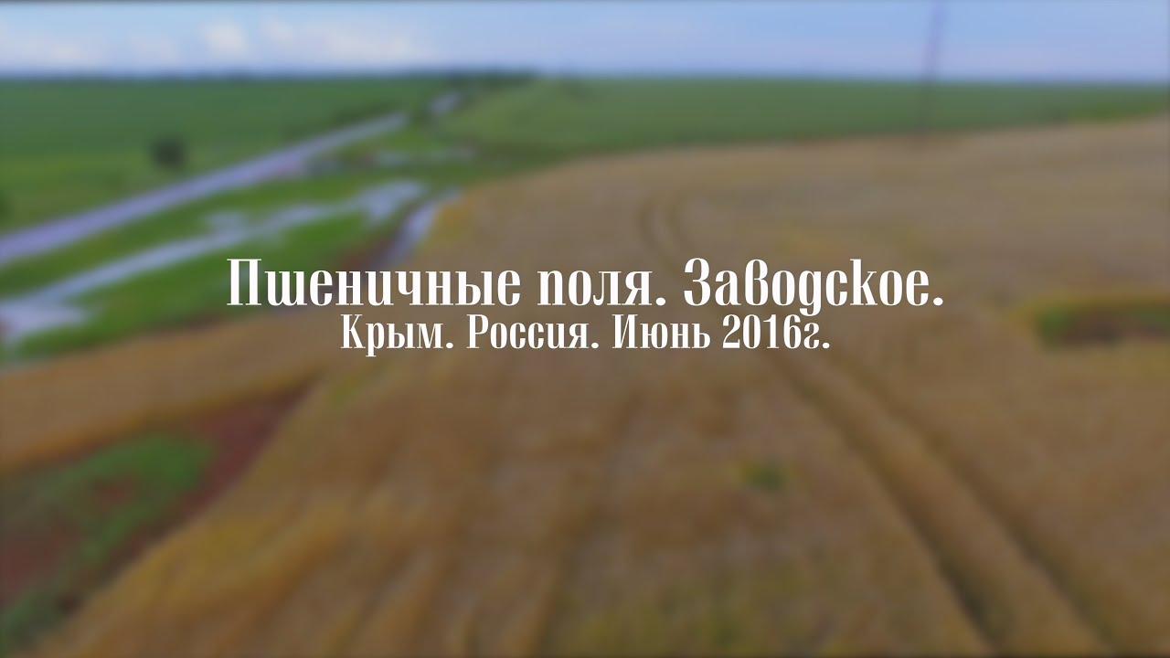 фото пшеничные поля