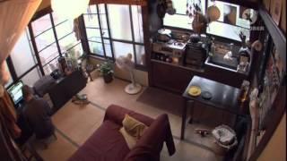 Токио: маленькая жизнь в большом городе
