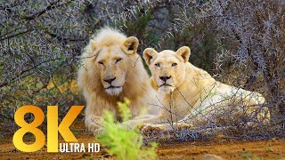 8K African Nature and Wildlife of Sanbona Wildlife Reserve - Relaxation Video & Sounds of Africa