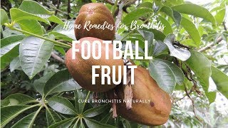 Home Remedies for Bronchitis -Football Fruit can cure Bronchitis Naturally