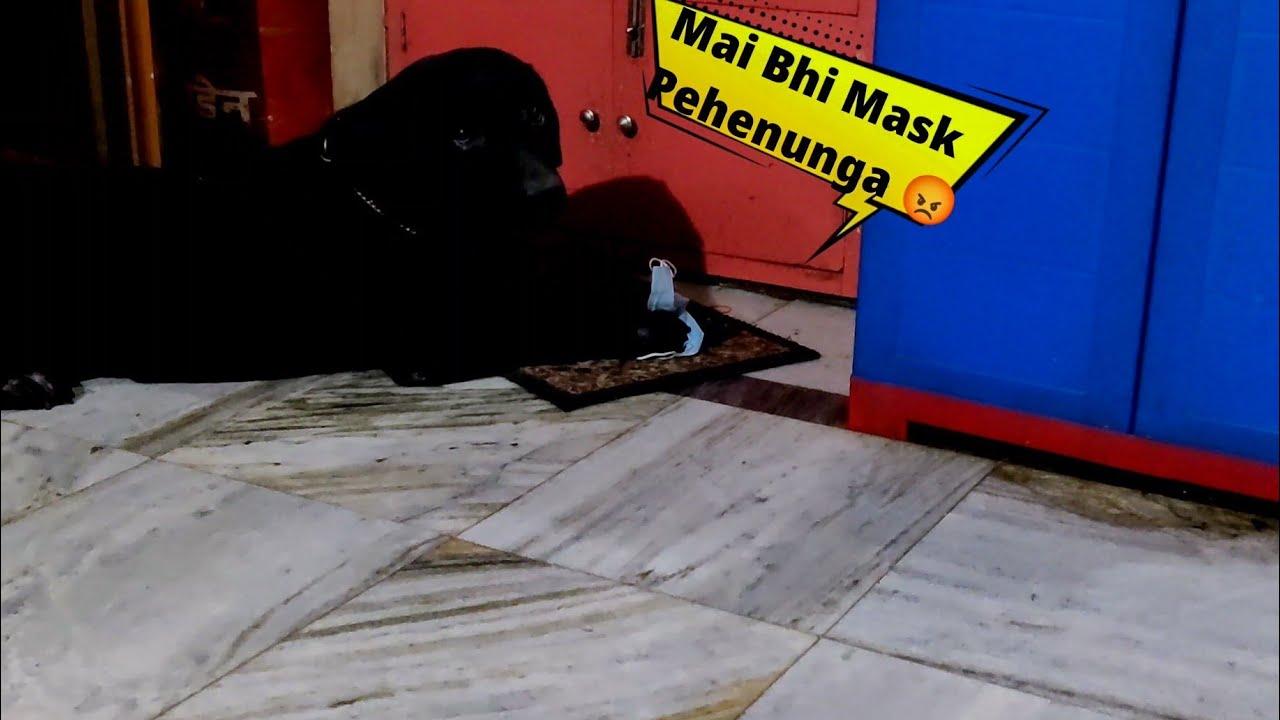 Rocky Ko Bhi Mask Pehenna Hai 😂