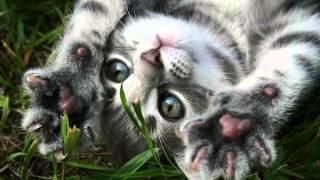 Видео про очень милых кошек и котят :3