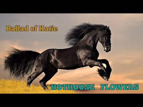 Hothouse Flowers - Ballad of Katie