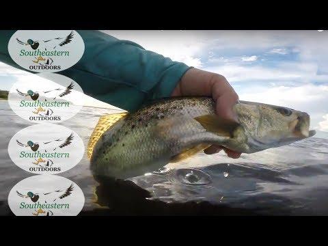 Florida Fishing - St Andrews Bay FL Wade Fishing - July 2017