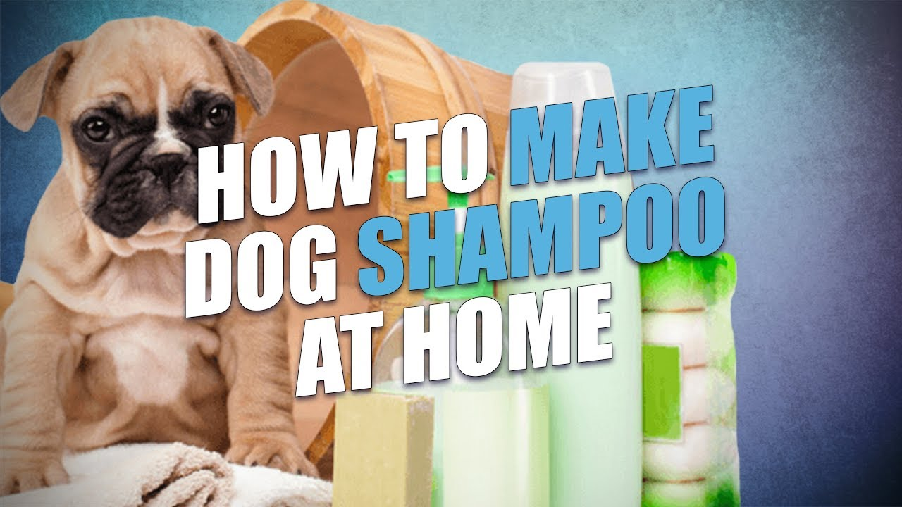 DIY Homemade Dog Shampoo Recipe