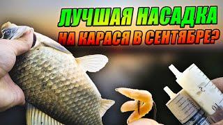 ЛУЧШАЯ и ХУДШАЯ НАСАДКА для ЛОВЛИ КАРАСЯ Как ПОГОДА влияет на КЛЁВ КАРАСЯ Рыбалка в СЕНТЯБРЕ