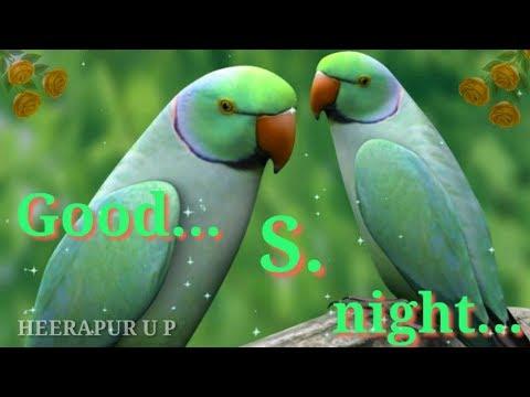 S Love Good Night Whatsapp Status Video S Name Good Night Whatsapp Status Video Good Night WhatsApp