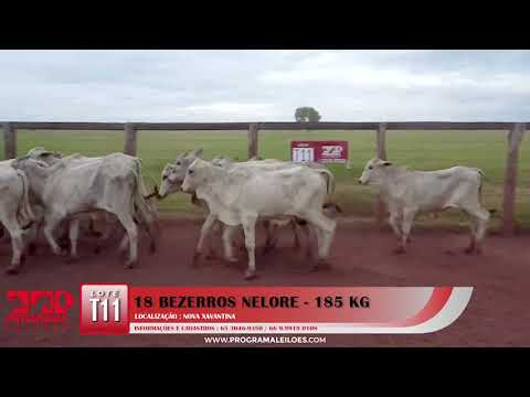 LOTE T11