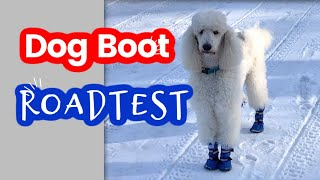 Dog Bootie Road Test  A Product Review | Standard Poodle Owner