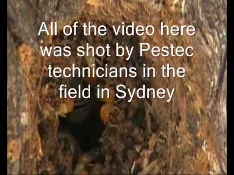 Two different types of termites