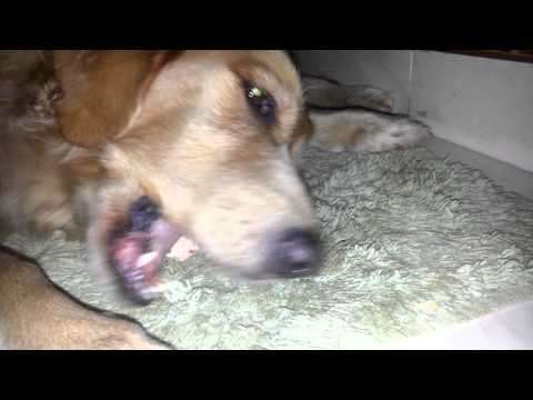 Knuckle bone treat - Raw Feeding
