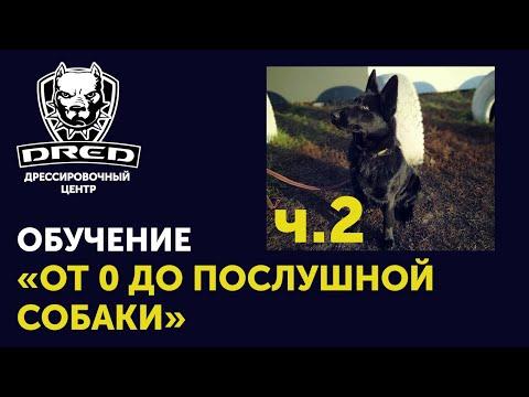 «От 0 до послушной собаки» ч.2   Выдержка, Рядом, Лежать    Черная немецкая овчарка Герда
