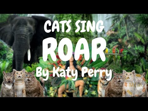 Cats Sing Roar by Katy Perry | Cats Singing Song