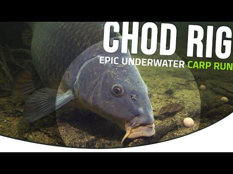 😱EPIC! Chod rig Underwater CARP RUN