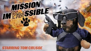 Ep 12: MISSION IMPAWSSIBLE (Finale)  Funny Dog Video
