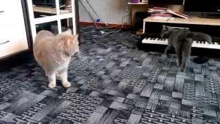 Веселые и смешные коты с нами 2019! Коты танцуют, чудят, орут, разговаривают и ругаются!