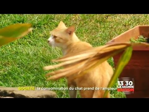 Pourquoi Mange-t-on le Chat a Kinshasa
