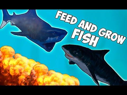 белая акула против акулы молота видео