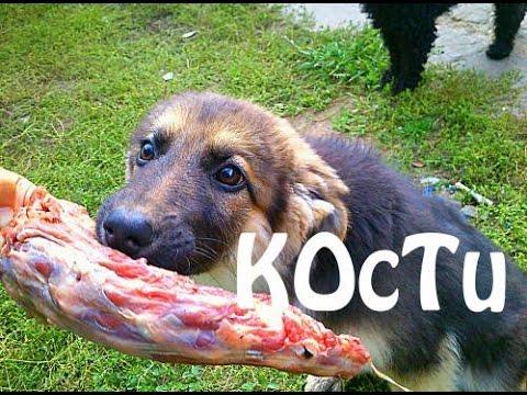 Какие КОСТИ МОЖНО и НЕЛЬЗЯ давать собаке?! ВАЖНО знать. Мокрый нос Бейлис овчарка